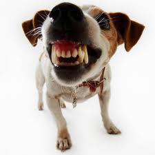 A small dog barking